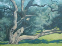 Big Old Oak